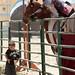 Renaissance Pleasure Faire 2012 055