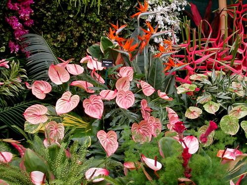 Horticultural Society of Trinidad & Tobago