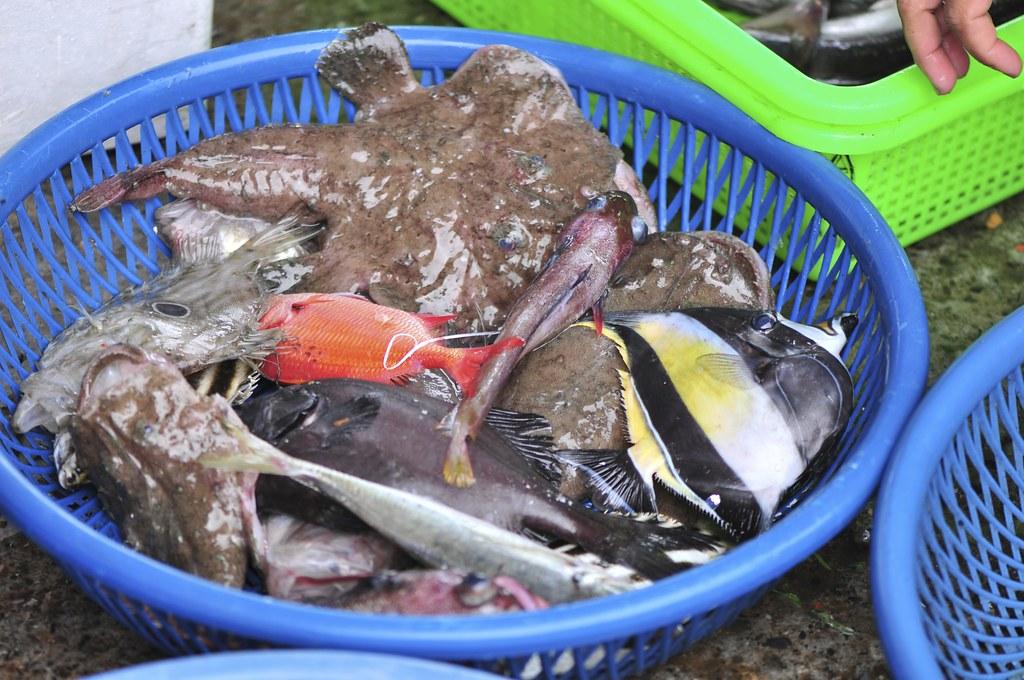 fishing port Daxi 22