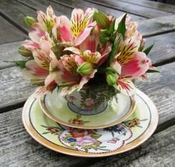 Teacup Alstroemeria
