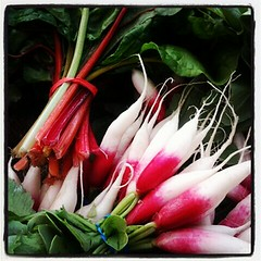 french breakfast radishes + rainbow chard