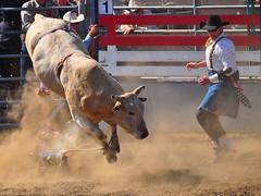 Bull Rider Down 2012