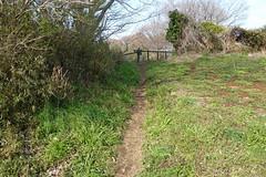 獅子ヶ谷市民の森(鋸坂へのアプローチ)(Approach to Nokogirizaka Ave., Shishigaya Community Woods)