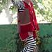 Renaissance Pleasure Faire 2012 087