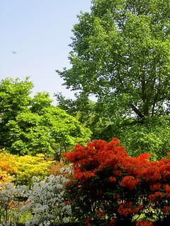 Azalea Garden at Kew