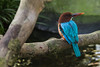 """Kingfisher caught looking for food San Diego Zoo 2011 • <a style=""""font-size:0.8em;"""" href=""""http://www.flickr.com/photos/33121778@N02/6890583716/"""" target=""""_blank"""">View on Flickr</a>"""