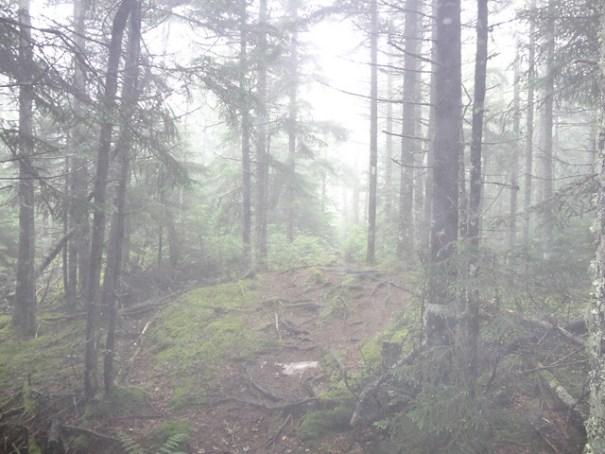 Mt. Cube Fog on NH Appalachian Trail