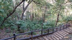 獅子ヶ谷市民の森(鋸坂)(Nokogirizaka Ave., Shishigaya Community Woods)