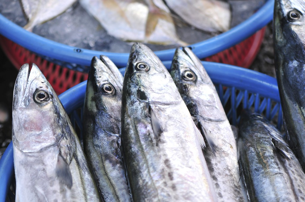 fishing port Daxi 48