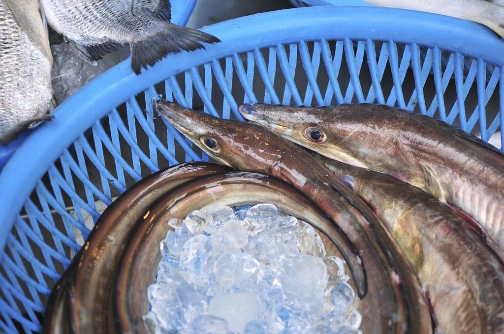 fishing port Daxi 49