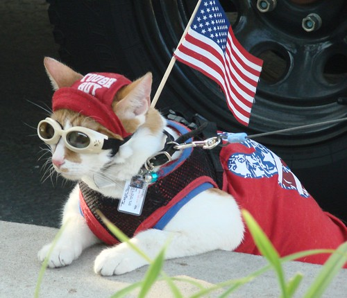 Thor, Cool Cat Patriot 7-4-2012