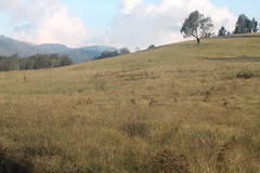 "Pendakian Sakuntala Gunung Argopuro Juni 2014 • <a style=""font-size:0.8em;"" href=""http://www.flickr.com/photos/24767572@N00/27128344666/"" target=""_blank"">View on Flickr</a>"