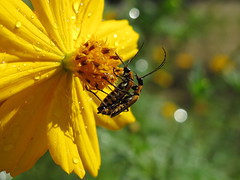 Happy Day for Bugs on Yellow flower!