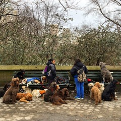 Dogs everywhere #newyork #centralpark #dogs #usa