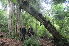 "Pendakian Sakuntala Gunung Argopuro Juni 2014 • <a style=""font-size:0.8em;"" href=""http://www.flickr.com/photos/24767572@N00/26557701743/"" target=""_blank"">View on Flickr</a>"