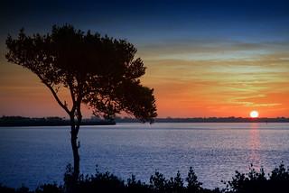 Manatee River Sunrise