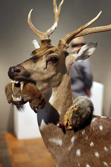 3rd Biennial Taxidermy show22