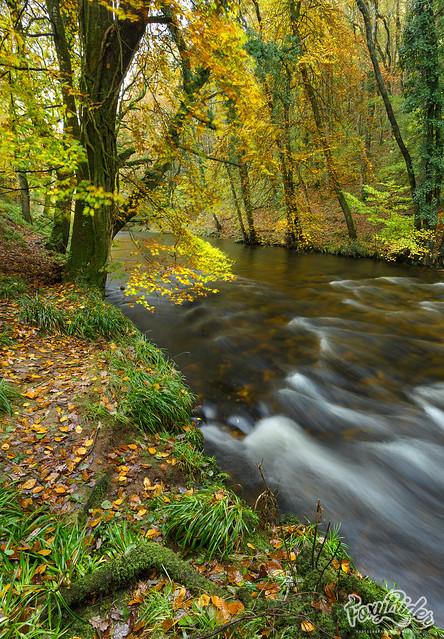 Autumn on the Teign