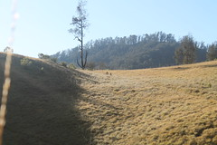 "Pendakian Sakuntala Gunung Argopuro Juni 2014 • <a style=""font-size:0.8em;"" href=""http://www.flickr.com/photos/24767572@N00/26555361794/"" target=""_blank"">View on Flickr</a>"
