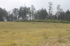 "Pendakian Sakuntala Gunung Argopuro Juni 2014 • <a style=""font-size:0.8em;"" href=""http://www.flickr.com/photos/24767572@N00/26556006414/"" target=""_blank"">View on Flickr</a>"