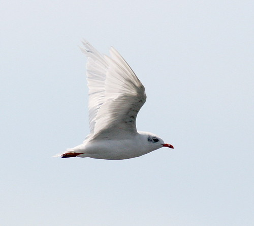 "Med  Gull • <a style=""font-size:0.8em;"" href=""http://www.flickr.com/photos/30837261@N07/10723466303/"" target=""_blank"">View on Flickr</a>"