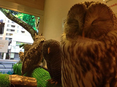 """Owl Cafe 12 • <a style=""""font-size:0.8em;"""" href=""""http://www.flickr.com/photos/66379360@N02/10589012933/"""" target=""""_blank"""">View on Flickr</a>"""
