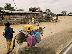 Go to the town well with your donkeys. Wait in line with the others. Walk home. #theworldwalk #travel #peru