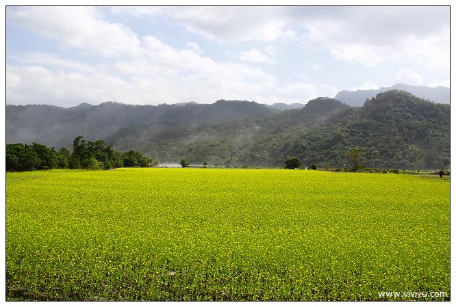 [台東.美食]立榮假期.看見農遊新樂園~採茶品茗趣&下田拔蘿蔔 @VIVIYU小世界