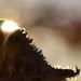 Frostens Kamp mot solen [Explore]