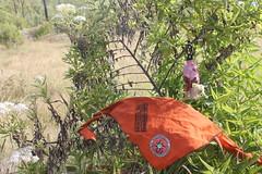"Pendakian Sakuntala Gunung Argopuro Juni 2014 • <a style=""font-size:0.8em;"" href=""http://www.flickr.com/photos/24767572@N00/27161719815/"" target=""_blank"">View on Flickr</a>"