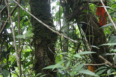 "Pendakian Sakuntala Gunung Argopuro Juni 2014 • <a style=""font-size:0.8em;"" href=""http://www.flickr.com/photos/24767572@N00/27093668541/"" target=""_blank"">View on Flickr</a>"