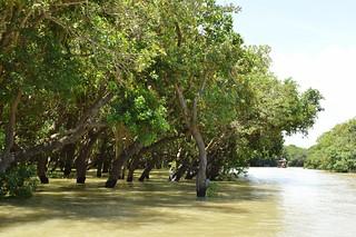 lac tonle sap - cambodge 2014 20