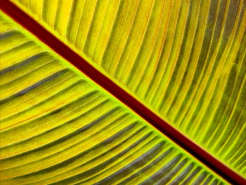 abstract lines diagonal artistic fineart minimalism texture pattern curve frond plant leaf foliage flora nature closeup cellphone southpasadena california zajdowicz motorola droid turbo photoshopexpress android mobile cameraphone smartphone availablelight outdoor outside