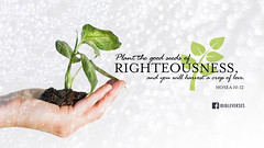 Plant the seeds of righteousness
