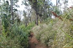 "Pendakian Sakuntala Gunung Argopuro Juni 2014 • <a style=""font-size:0.8em;"" href=""http://www.flickr.com/photos/24767572@N00/26556027874/"" target=""_blank"">View on Flickr</a>"