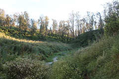 "Pendakian Sakuntala Gunung Argopuro Juni 2014 • <a style=""font-size:0.8em;"" href=""http://www.flickr.com/photos/24767572@N00/26555425044/"" target=""_blank"">View on Flickr</a>"