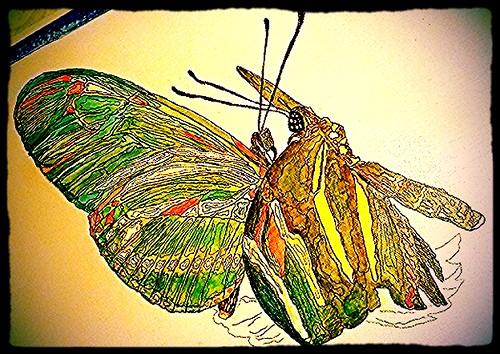 art google flickr mixedmedia butterflies cnn microsoft... (Photo: The People's Prodigy**Fugitive Savant on Flickr)