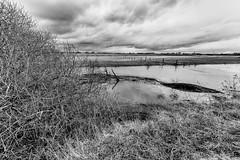 Flooded Flanders Fields