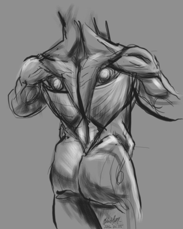 Male Torso Back Study