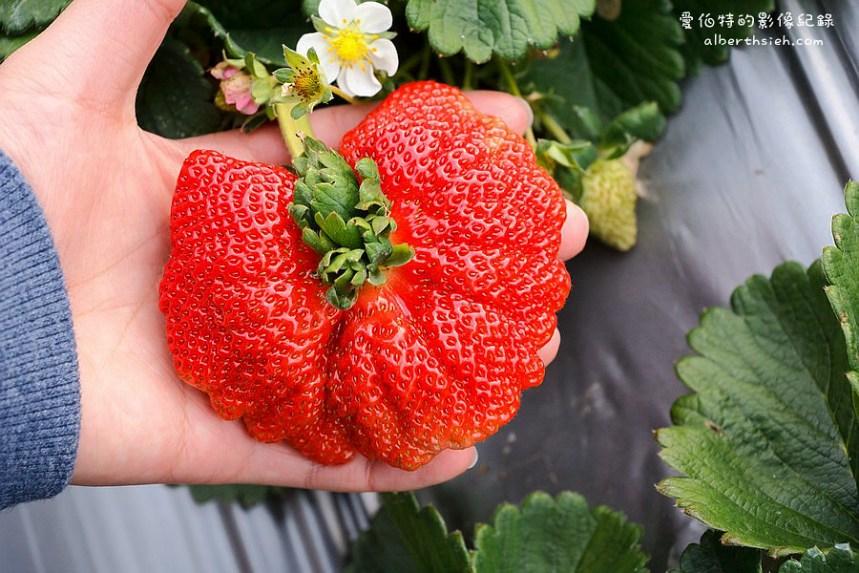 苗栗大湖,草莓園