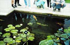 32-28-86 28 - Stapeley Fish (1)