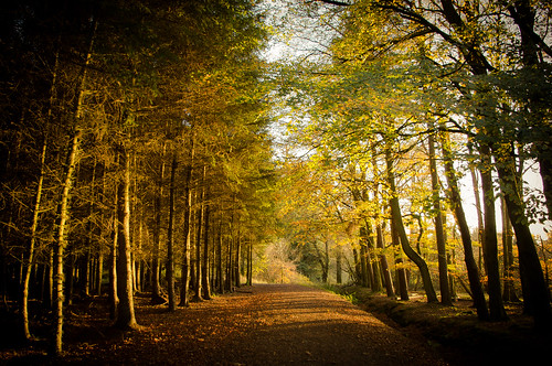 Autumn Trail by Neillwphoto, on Flickr