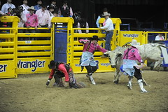 5-375 Bull Fighters