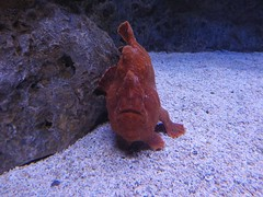 Mocheté de l'Aquarium Lisbonne