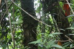 "Pendakian Sakuntala Gunung Argopuro Juni 2014 • <a style=""font-size:0.8em;"" href=""http://www.flickr.com/photos/24767572@N00/27162167765/"" target=""_blank"">View on Flickr</a>"
