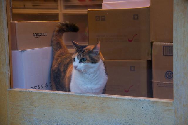 パン屋の猫