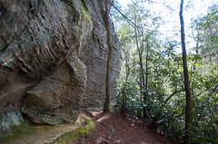 Trail bark