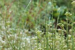 "Pendakian Sakuntala Gunung Argopuro Juni 2014 • <a style=""font-size:0.8em;"" href=""http://www.flickr.com/photos/24767572@N00/26555394724/"" target=""_blank"">View on Flickr</a>"
