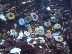 belles anémones Aquarium Lisbonne