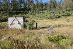 "Pendakian Sakuntala Gunung Argopuro Juni 2014 • <a style=""font-size:0.8em;"" href=""http://www.flickr.com/photos/24767572@N00/27092734841/"" target=""_blank"">View on Flickr</a>"